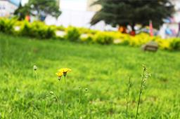 校园一角——青翠的草地