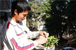绿色环保,男生也爱小盆栽